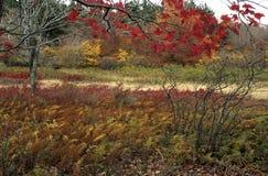 Herbst-szenische @ Transportwagen-Grasschollen lizenzfreie stockbilder