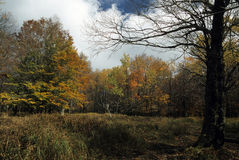 Herbst-szenische @ Transportwagen-Grasschollen Stockfoto