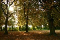 Herbst-Tag I lizenzfreie stockfotos