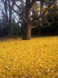 Herbst tapis stockfoto