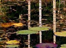 Herbst-Teichsprengringe Lizenzfreies Stockfoto