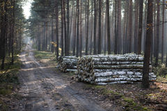Herbst tief forrest Lizenzfreies Stockfoto