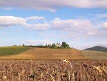 Herbst in Toskana - Feld von getrockneten Sonnenblumen stockbild