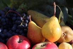 Herbst trägt Stillleben, Äpfel, Birnen und Trauben, Herbstnaturkonzept Früchte Unscharfer Hintergrund Lizenzfreie Stockfotos