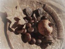 Herbst trägt Stillleben Früchte Stockfotos