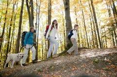 Herbst-Trekking mit Hund lizenzfreie stockbilder