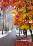Herbst trifft sich Winter Lizenzfreie Stockfotografie