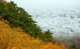 Herbst trifft sich Winter Stockfotografie