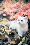 Herbst u. Kätzchen Stockbild