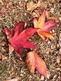 Herbst und Blätter Stockbild