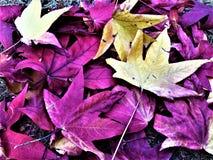 Herbst und Blätter Lizenzfreie Stockfotos