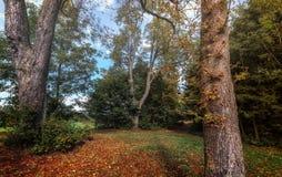 Herbst und enorme Baumstämme Stockbild
