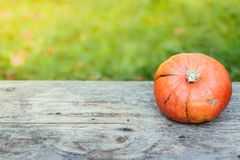 Herbst und Ernten: K?rbis liegt auf einem rustikalen, Holztisch Textraum lizenzfreie stockbilder