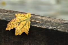 Herbst und gelbes Blatt lizenzfreie stockfotos