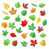Herbst- und Sommerblätter in der flachen Art Vektorikonen stellten ein vektor abbildung