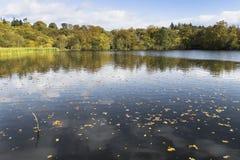 Herbst- und Wolkenreflexionen im See punktierten mit Herbstlaub Lizenzfreies Stockbild