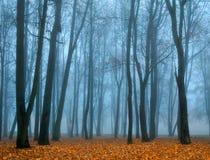 Herbst verließ Park im nebeligen Wetter - Herbstlandschaftsansicht des nebeligen Parks des Herbstes Stockfotografie