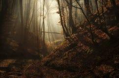 Herbst verzauberte Wald mit Sonnenstrahlen und -nebel Lizenzfreies Stockfoto