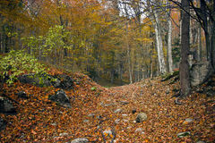 Herbst in Wald 1 Lizenzfreies Stockfoto