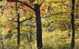 Herbst-Wald Stockfotos