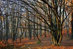 Herbst in Wald 13 Stockfotografie