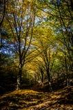 Herbst-Wald Stockbilder