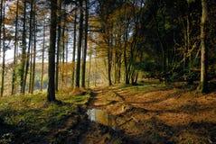 Herbst-Wald Lizenzfreie Stockbilder