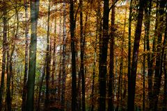 Herbst-Wald Stockfoto