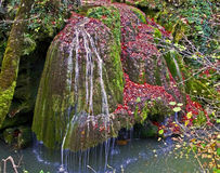 Herbst in Wald 5 Stockfoto
