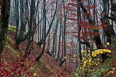 Herbst in Wald 6 Lizenzfreies Stockfoto