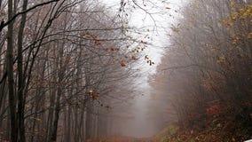 Herbst, Wald, Nebel, überraschend Lizenzfreies Stockfoto