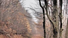 Herbst, Wald, Nebel, überraschend Stockbild
