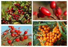 Herbst-Waldfrucht-Collage Stockfotos