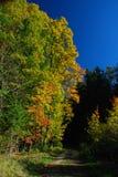 Herbst am Waldrand Stockfotos