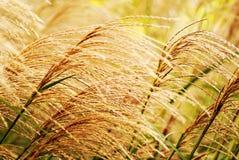 Herbst Weed Stockbild