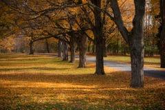 Herbst-Weg Lizenzfreies Stockbild