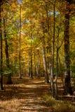 Herbst-Weg im Holz virginia Stockfoto