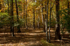 Herbst-Weg im Holz virginia Stockbild