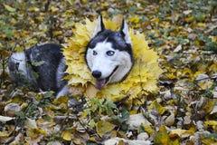 Herbst Weg im Wald mit einem Haustier stockfotos