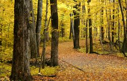 Herbst-Weg-Methode Lizenzfreies Stockbild