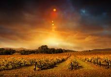 Herbst-Weinberg-Sonnenuntergang Lizenzfreie Stockfotos