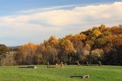Herbst-Wiese und Bäume Stockbilder