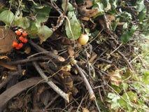 Herbst Woodpile Stockfotos