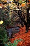 Herbst-Zeit Stockfotos