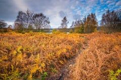 Herbstadlerfarn auf Ufer von Kielder-Wasser Lizenzfreie Stockfotos