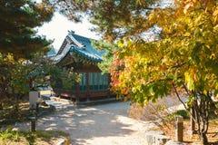 Herbstahorn und koreanische traditionelle Architektur an Deoksugungs-Palast in Korea Lizenzfreies Stockfoto