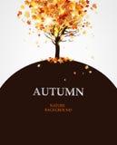 Herbstahornbaum Lizenzfreie Stockfotografie
