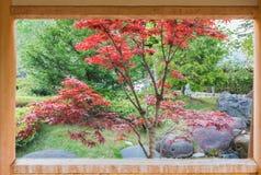 Herbstahornbaum in Japan-Garten Stockbilder