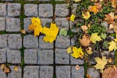 Herbstahornblätter auf den Pflastersteinen Lizenzfreies Stockbild