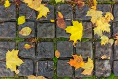 Herbstahornblätter auf den Pflastersteinen Lizenzfreie Stockfotos